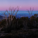 Mt Coree 2 by nudibranches