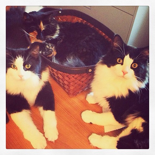 Photo Friday: Family (Felix, Grisabella, Oscar)