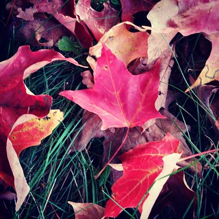 Got leaves? #fallinnewengland #fallfoliage #mapleleaves #autumn #fallleaves #instafall