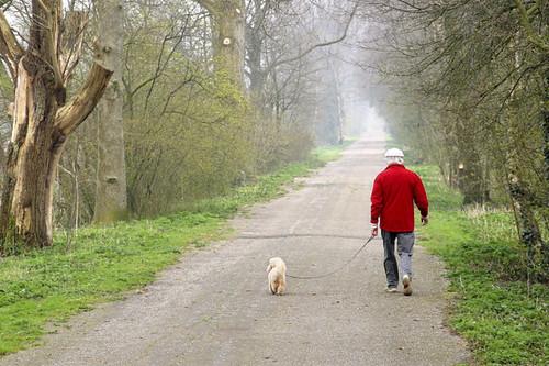 هل يمكنك أن تفقد كمية كبيرة من الوزن عن طريق المشي؟