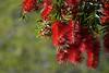 053/365 warm redness by J.R.P
