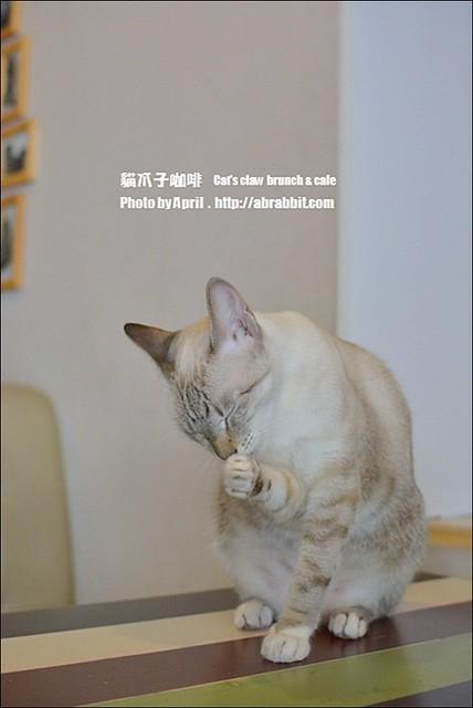 22533678071 ffd60721fe z - [台中]貓爪子咖啡--早午餐豐盛,店內有四隻貓兒超可愛!@北區 大德街 中國醫