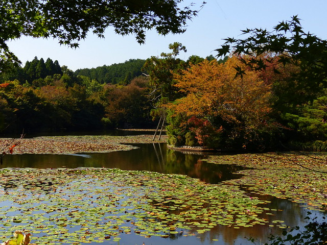 鏡容池 - Ryoanji Temple gardens in autumn