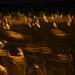 reeds #3 by chrisfriel