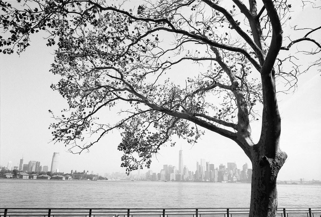 NY film 8