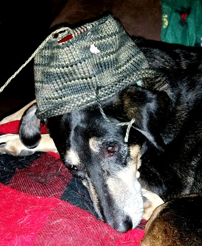 Hound mix senior dog and knitting