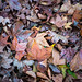 Autumn by Jordi Corbilla Photography