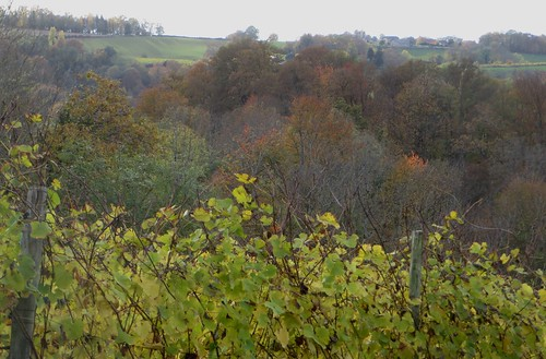 Promenade dans les vignes, route de la Chapelle de Rousse, Jurançon, Béarn, Pyrénées Atlantiques, Aquitaine.