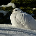 White beauty by annkelliott