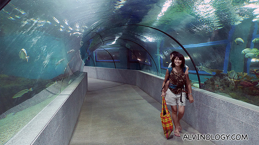 The transparent underwater tunnel