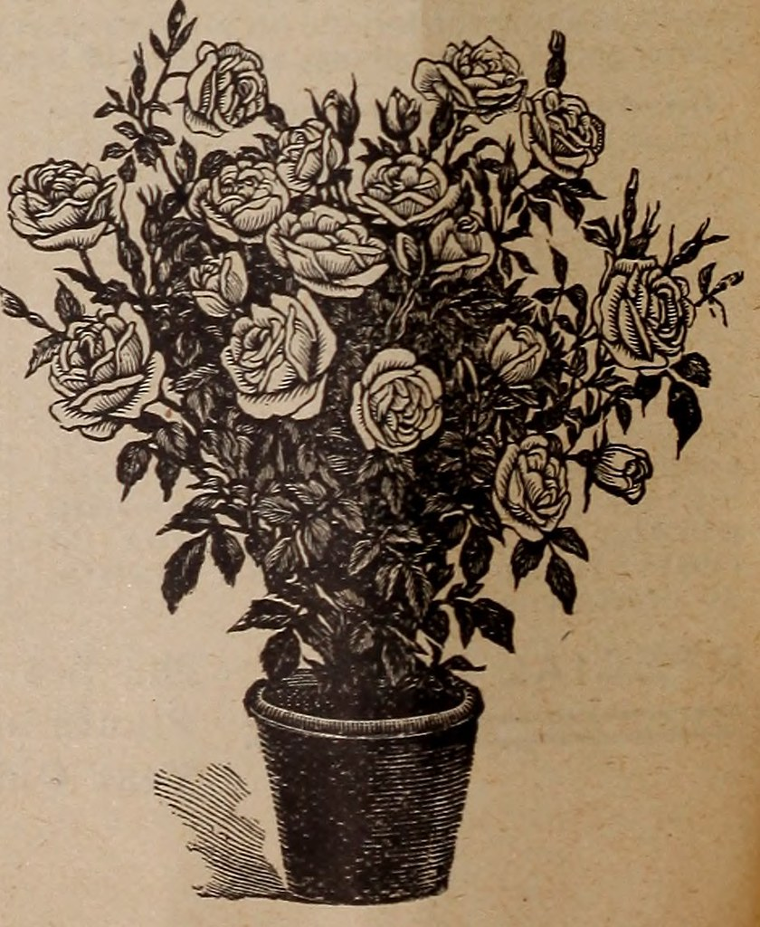IMAGE FROM PAGE 31 OF 1902 ILLUSTRATED CATALOGUE BEAUTI FLICKR