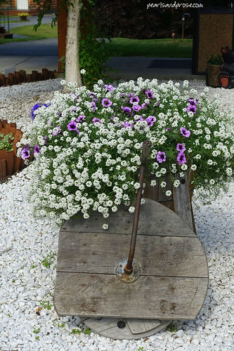 fairbanks_babysbreath_web