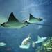 Under the Sea... by Sandra Finner