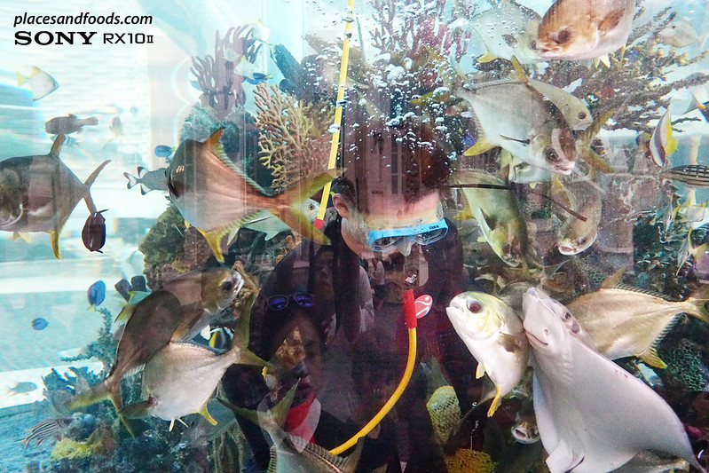 mgm macau diver cleaning aquarium