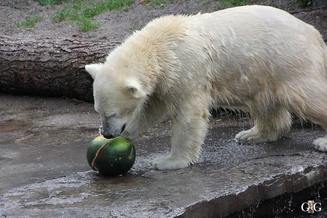 Zoo Rostock 19.09.2015130