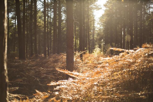 Forêt de Rennes - Paisible atmosphère