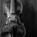 Violin B&W by Fe_Lima