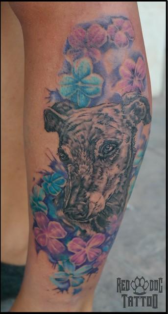 Galgo portrait tattoo