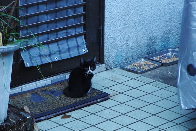 Today's Cat@2016-11-22