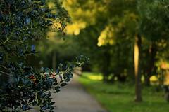 Autumn bokeh in the park.