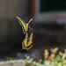 Butterfly dance by annfrau