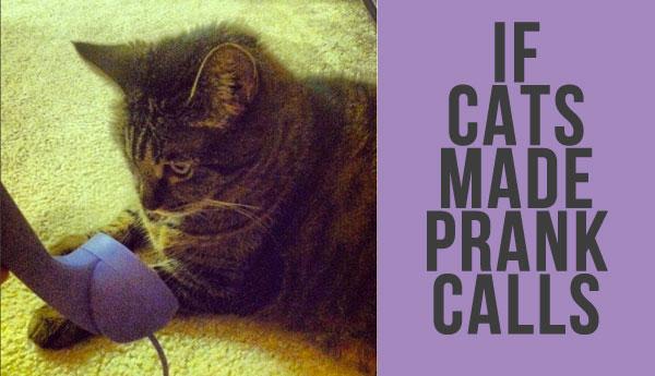 if-cats-made-prank-calls