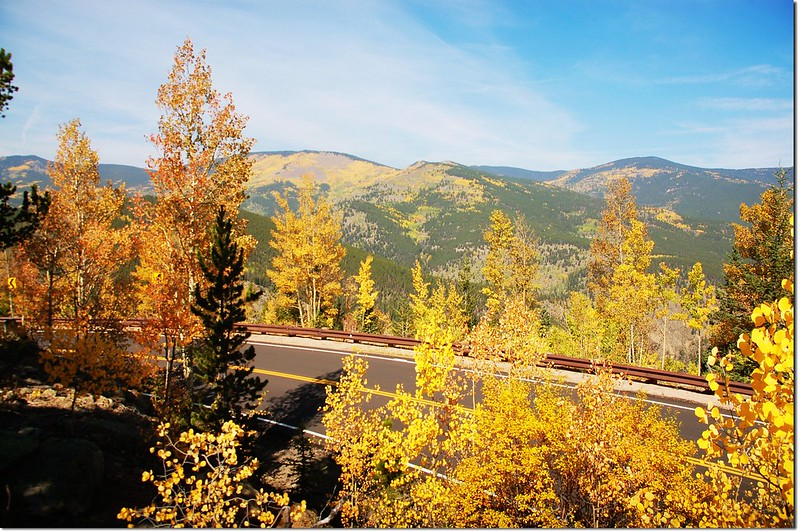 Aspen in Fall, Mount Evans Scenic Byway 3