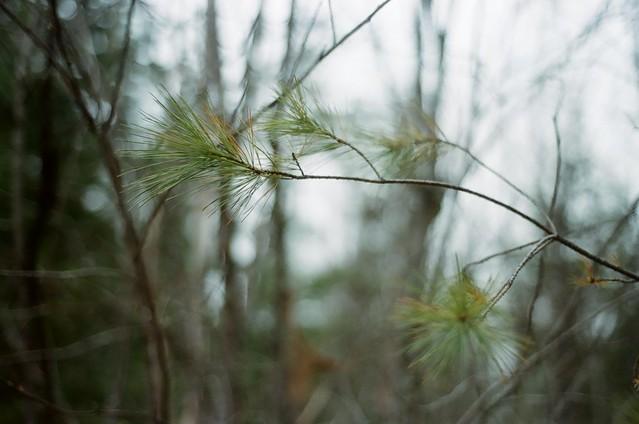 Feminine Forest
