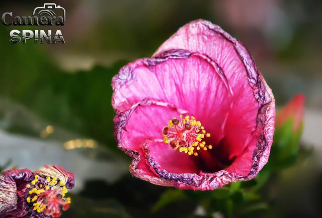 Flor 033