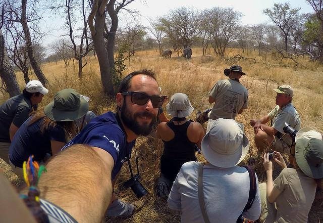 Safari andando con rinos