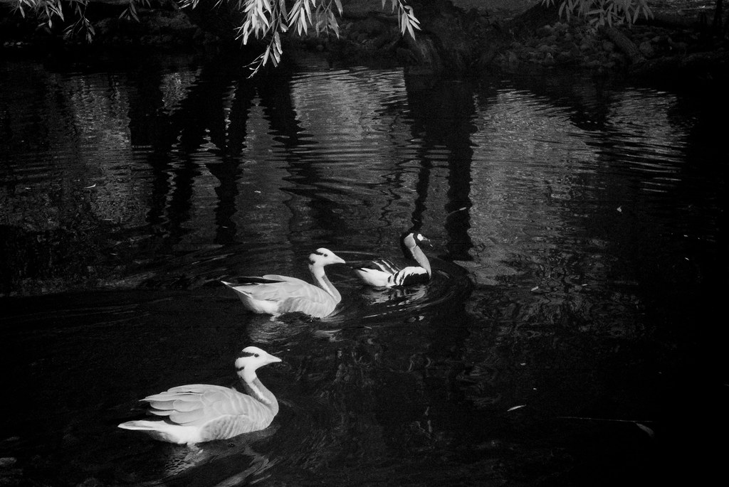 Infrared River Zoo_39