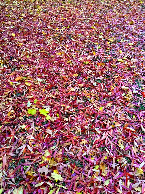 22 10 - Autumn arrives