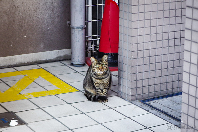 Today's Cat@2015-11-04