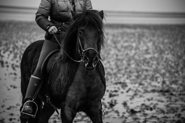 Mandø Horseback Riders