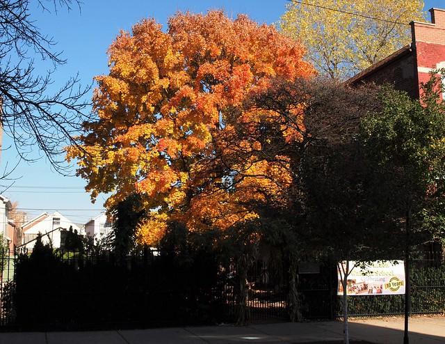 City Garden Waldorf School