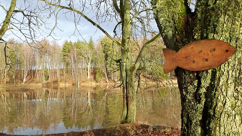 park trees winter lake europe baltic latvia latvija 2015 kazdanga dzirnavezers katzdangen