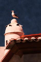 Dona do telhado
