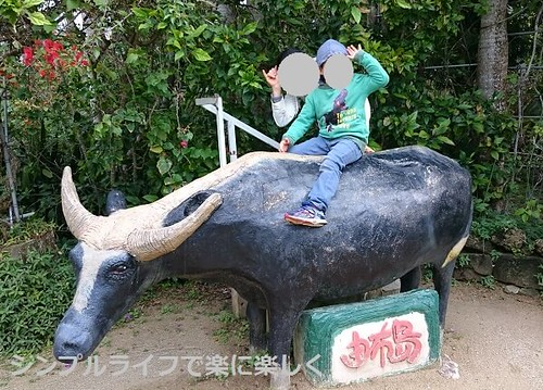 石垣島、由布島水牛と