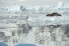 Floating Seal