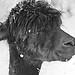 MD Zoo ~ smiling Alpaca - HMBT! by karma (Karen)