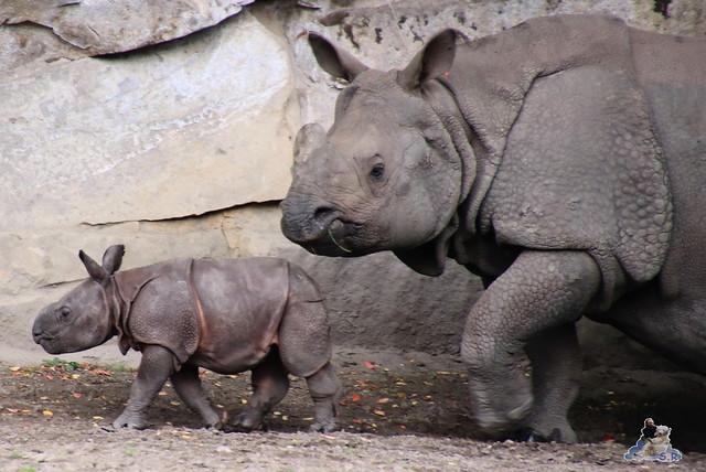 Tierpark Berlin 20.09.2015  0163