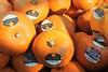 Tesco Pumpkins  World Vision Halloween and Autumn Oakham Rutland by @oakhamuk
