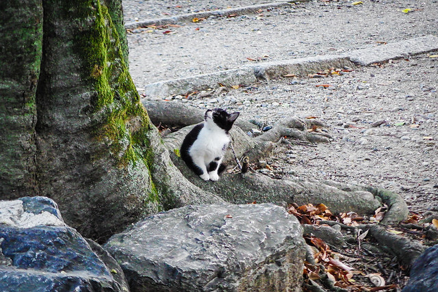 Today's Cat@2015-11-02