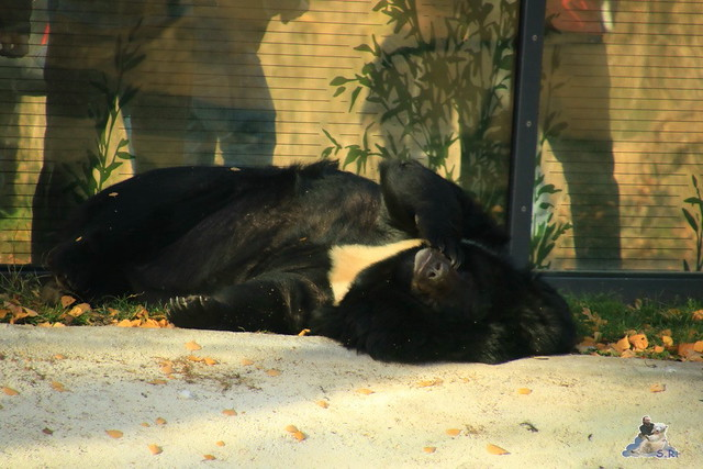 Zoo Berlin 08.11.2015  0128