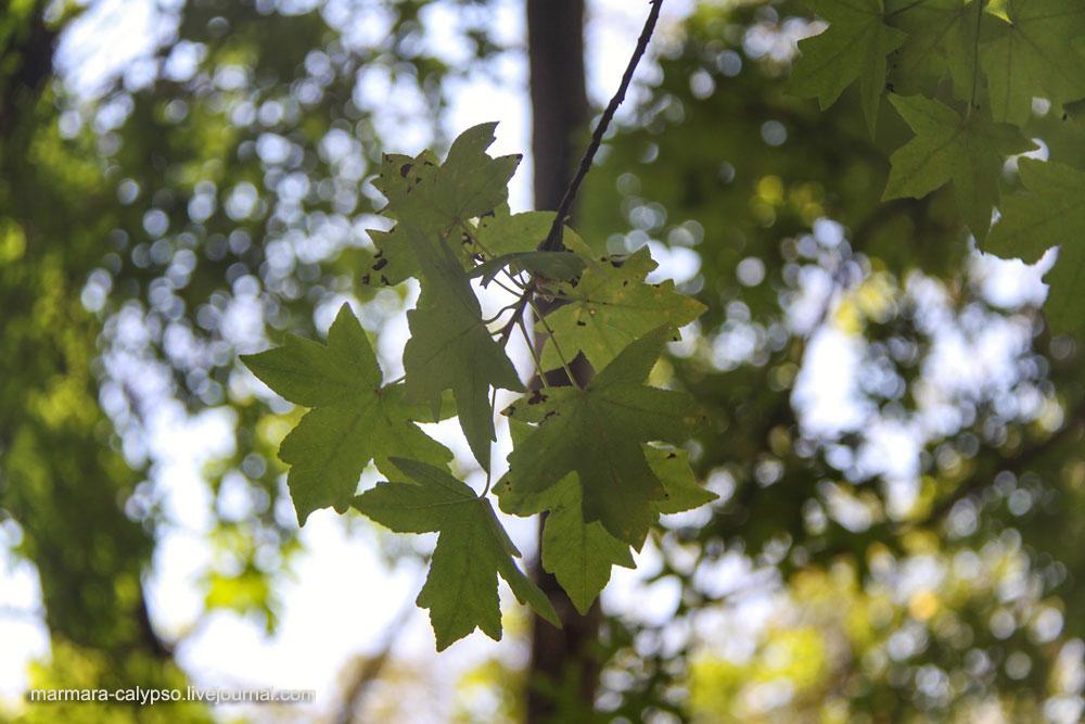 günlük ağacı