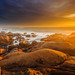 Golden Light by paulosilva3