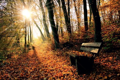 autumn picnic place