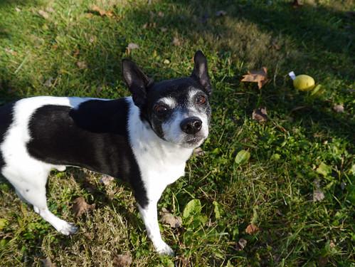 2015-11-01 - Dogs & Sun - 0032 [flickr]