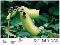 肥豬豆-02