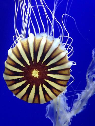 The Age of Aquarium #1